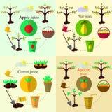 Planting process set and juice flat vector, set Stock Images