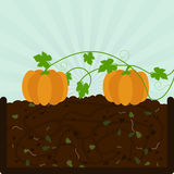 Planting pumpkin and compost Stock Images