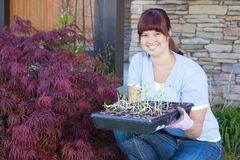 Planting season. A young woman displays a tray of seedlings for her vegetable garden Royalty Free Stock Image