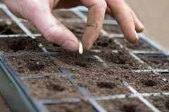 Planting a seed Royalty Free Stock Photos