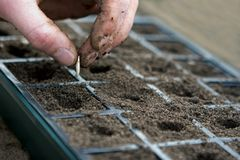 Planting a seed. Seed planting into fertile soil royalty free stock photography