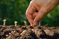 Planting seed Stock Images