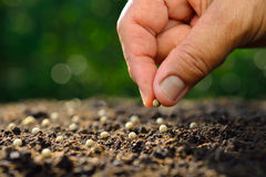 Planting seed. Farmer's hand planting seed in soil Royalty Free Stock Image