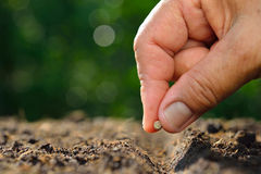Planting seed. Farmer's hand planting seed in soil Royalty Free Stock Photo