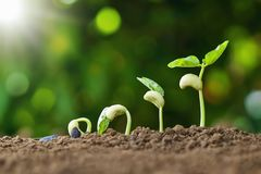 Free Planting Seed Grow Step Concept In Garden And Sunlight. Agriculture Idea Royalty Free Stock Image - 155803986