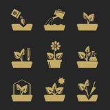 Planting and seeding ground signs. Plants seeds, greenhouse flowers vector icons Stock Image