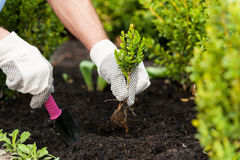 Planting a seedling. Royalty Free Stock Images