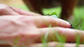 Planting, seedling, Close up of woman`s and child`s hands putting back organic soil on the land together over blurred stock video