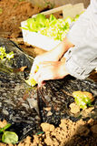 Planting a seedling flowers Royalty Free Stock Photography