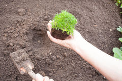 planting seedling Royalty Free Stock Images