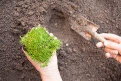 Planting seedling Stock Photo