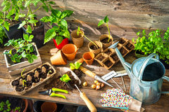 Planting seedlings in greenhouse Stock Photos