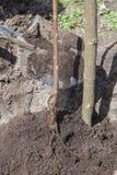 Planting seedlings in landing pit Royalty Free Stock Photos