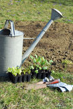Planting seedlings Stock Photography