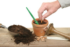 Planting seeds Stock Image