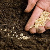 Planting seeds Stock Images