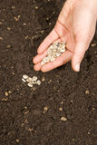 Planting seeds Royalty Free Stock Images