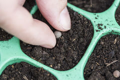 Planting seeds Stock Photography