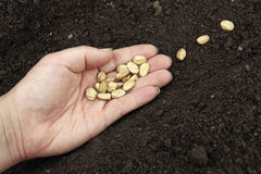 Planting  seeds in prepared soil Royalty Free Stock Image