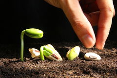 Planting seeds. Planting from seed to growth Stock Image