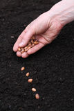 Planting seeds in soil Royalty Free Stock Images
