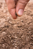 Planting seeds in soil Stock Photo