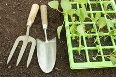 Planting seeds in soil Royalty Free Stock Photos