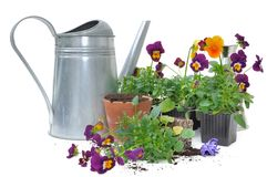 Planting small flowers Royalty Free Stock Images
