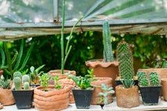 Planting small ornamental plants Royalty Free Stock Photos
