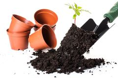 Planting a small plant on pile of soil Stock Photos