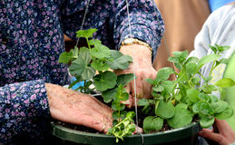 Planting Spring stock photography