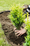 Planting in the spring Stock Image