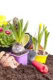 Planting spring flowers Stock Image