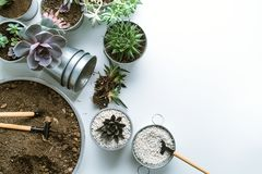 Planting of succulents. Top view of planting succuletns into pot with copy space stock image