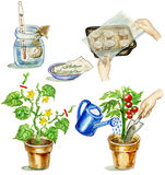 Planting tomato. Step-by-step manual illustrations set Stock Images