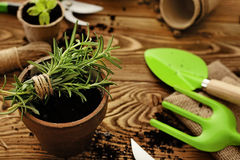 Planting tools. Gardening tools, watering can, seeds, plants and soil Stock Photography