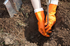 Planting   tree Stock Images