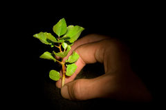 Planting tree. Young green growing tree with a hand planting it. Illuminated by a light spot royalty free stock images