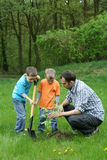 Planting a tree. Father and sons planting a tree - working together royalty free stock photography