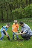 Planting a tree. Father and sons planting a tree - working together stock photography