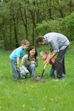 Planting a tree. Father mother and sons planting a tree - working together stock photography