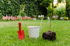 Planting tree in blooming garden Royalty Free Stock Photo