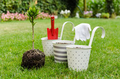 Planting tree in blooming garden Royalty Free Stock Photography