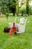 Planting tree in blooming garden Royalty Free Stock Photos
