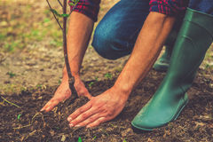 Planting a tree. Close-up on young man planting the tree while working in the garden stock image