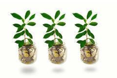 Planting tree coins. Abstrct planting tree coins to grow interest and good saving royalty free stock images