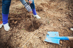 Planting tree on field Stock Image