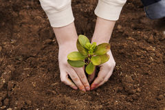 Planting tree in the garden. Planting green three in the garden royalty free stock image