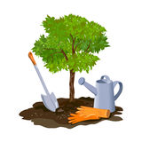 Planting a tree in the ground. Vector illustration royalty free illustration