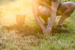 Planting a tree. Man planting a tree in summertime, outside in t. He garden. Environment and ecology royalty free stock photo